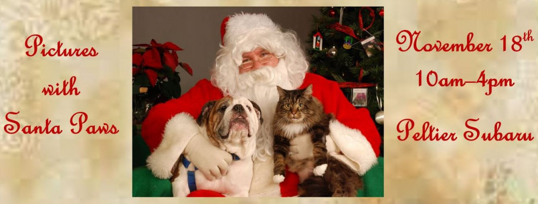 santa paws is coming to town - Humane Society Christmas Cards